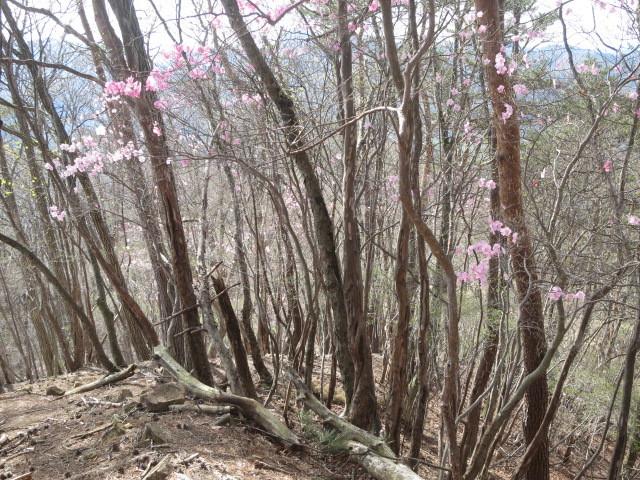 1.8花の稜線.JPG
