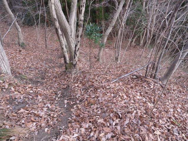 4.1落ち葉の急斜面.JPG