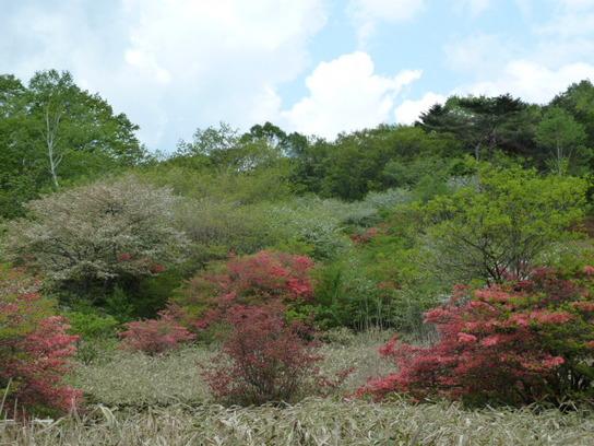 井戸湿原2.JPG