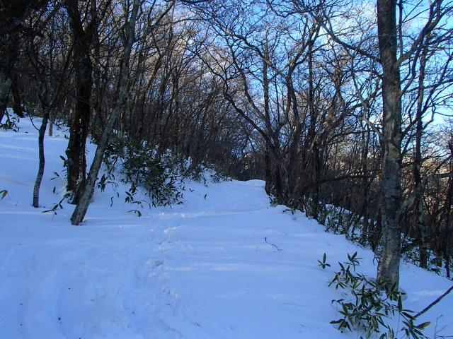1.3登山道.JPG