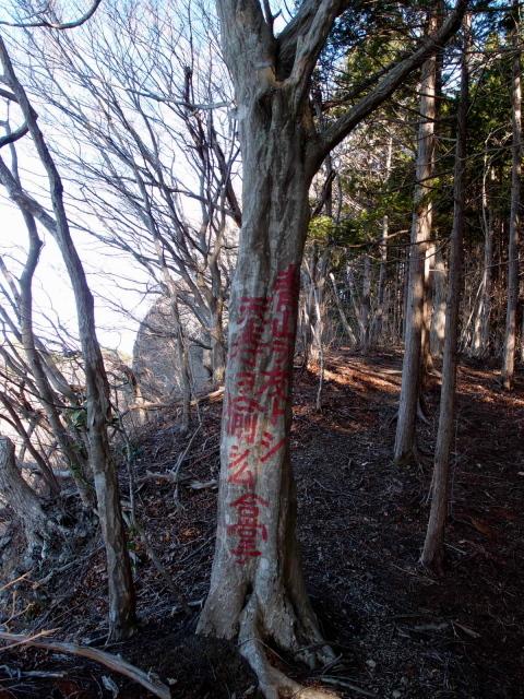 2.5合掌の木.JPG