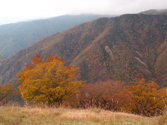 2.8稜線に上がると紅葉.JPG