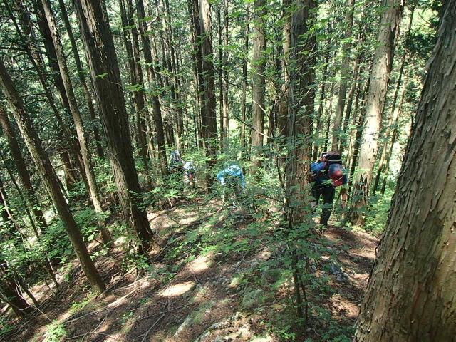 4.4杉林の急斜面.JPG
